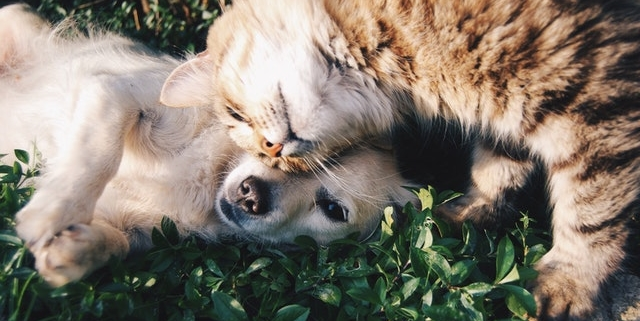 a cat and dog rolling around in the green grass with their heads touching